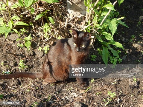 black cat lives on the streets : Stock Photo