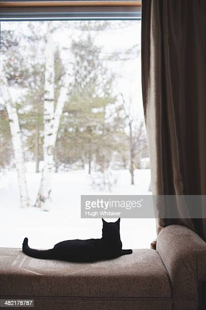 Black cat lying on daybed