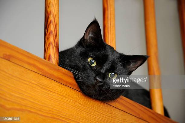 Black cat peering through railings