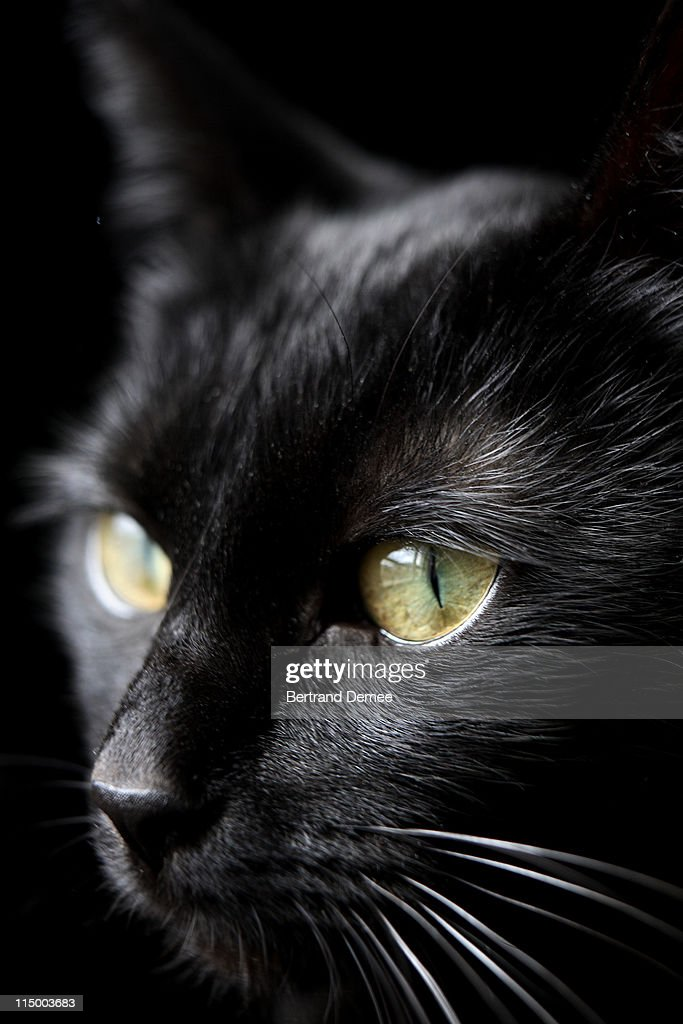 Black cat : Stock Photo