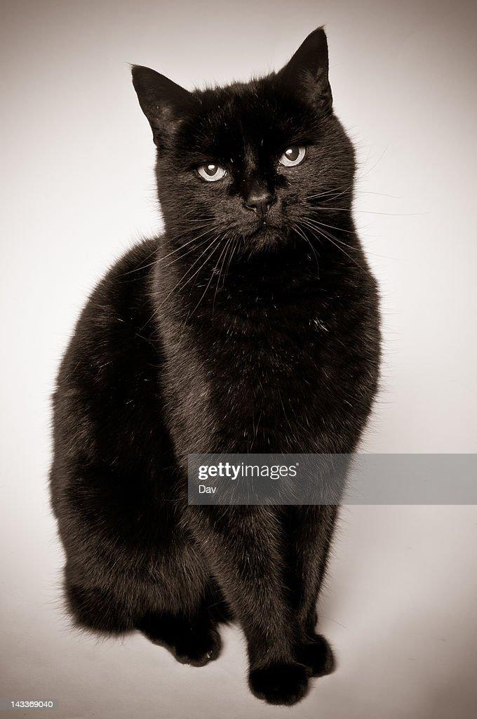 Black cat : Stock Photo