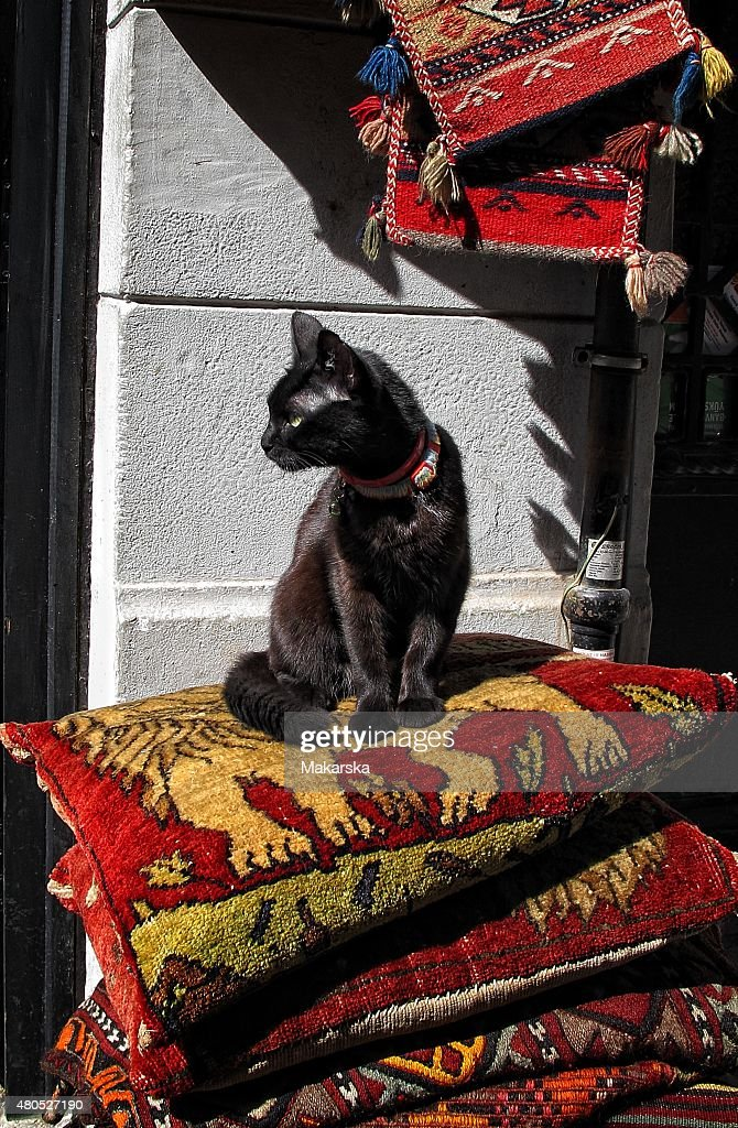 Black Cat : Stockfoto