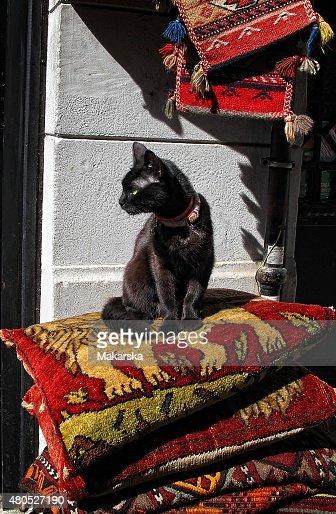 Schwarze Cat : Stock-Foto