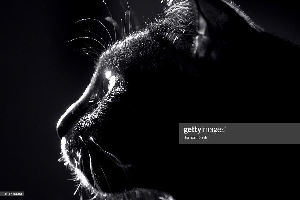 Black Cat Profile with Starburst Reflection on Cat's Eye : Stock Photo