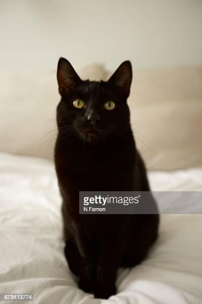 Black Cat Sat on White Bed