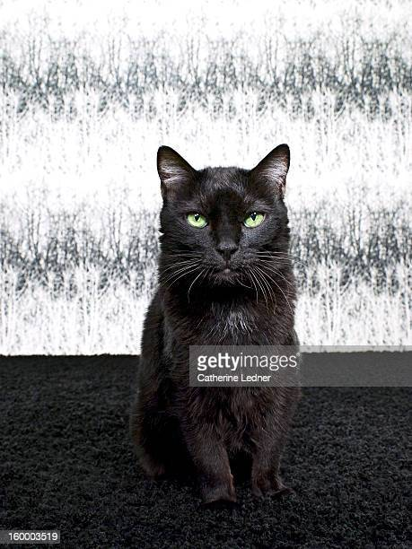 Black Cat Seated on Fancy Set