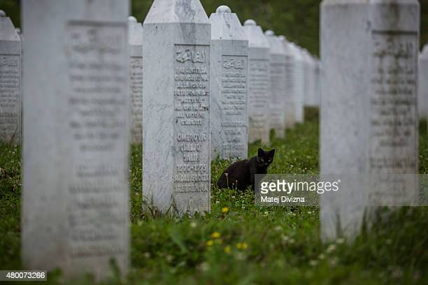 A black cat sits between gravestones at the Potocari cemetery and memorial near Srebrenica on July 9 2015 in Srebrenica Bosnia and Herzegovina The...