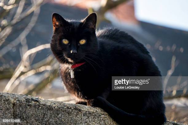 Black cat sitting on a wall