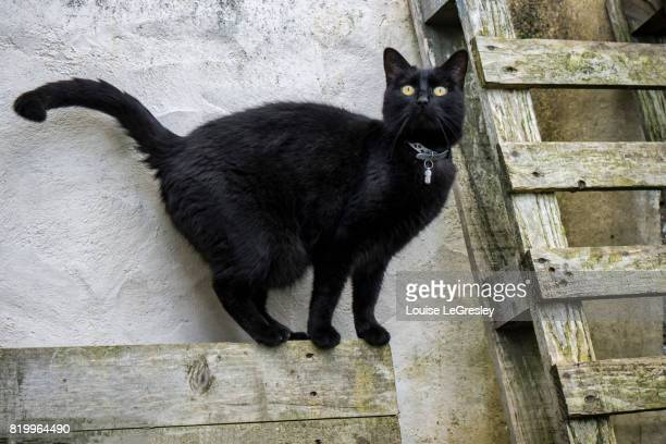 Black cat standing on a wooden plank