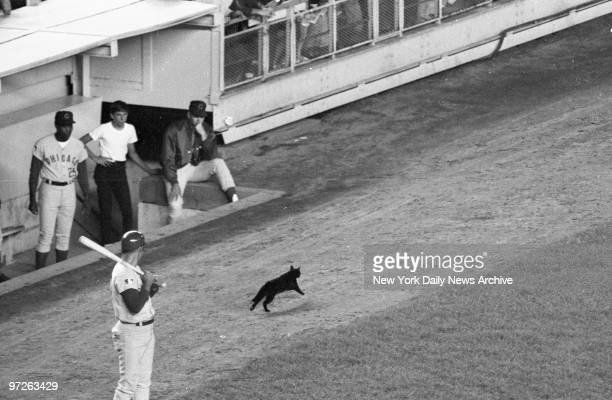 Black cat stopped Mets game momentarily Original 1969 caption below Nobody we know would ever dream of claiming that luck has anything to do with the...