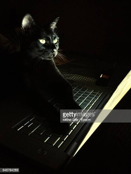Black Cat Using Laptop