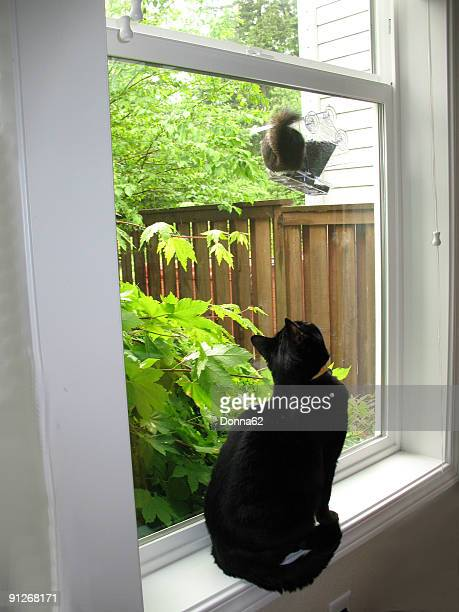 Black Cat Watching Squirrel at Bird Feeder