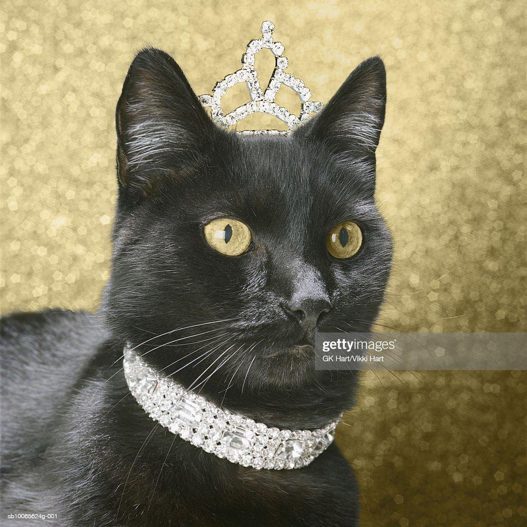 Black cat wearing dimond collar and tiara