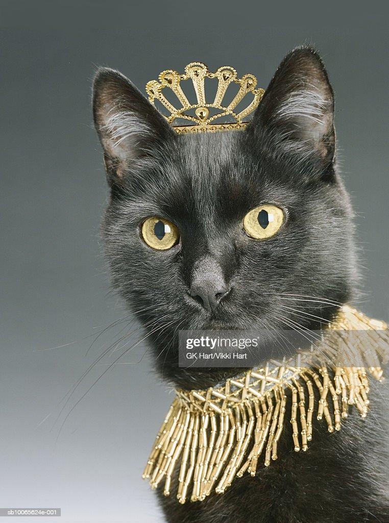 Кот с короной картинка