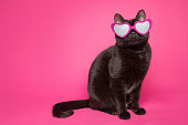 An adorable black cat wearing heart-shaped glasses sitting on a pink background.