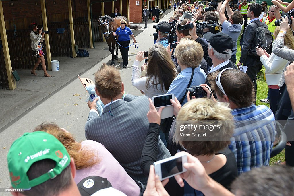 Black Caviar arrives at the track in front of a big crowd for her exhibition gallop in between races at Caulfield Racecourse on February 2, 2013 in Melbourne, Australia.