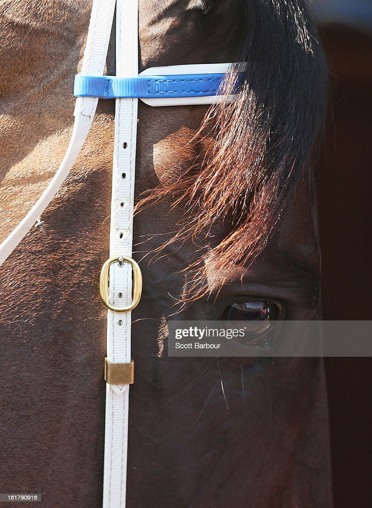 Black Caviar looks on in her stall before race 7 the Black Caviar Lightning Stakes during Lightning Stakes Day at Flemington Racecourse on February 16, 2013 in Melbourne, Australia.