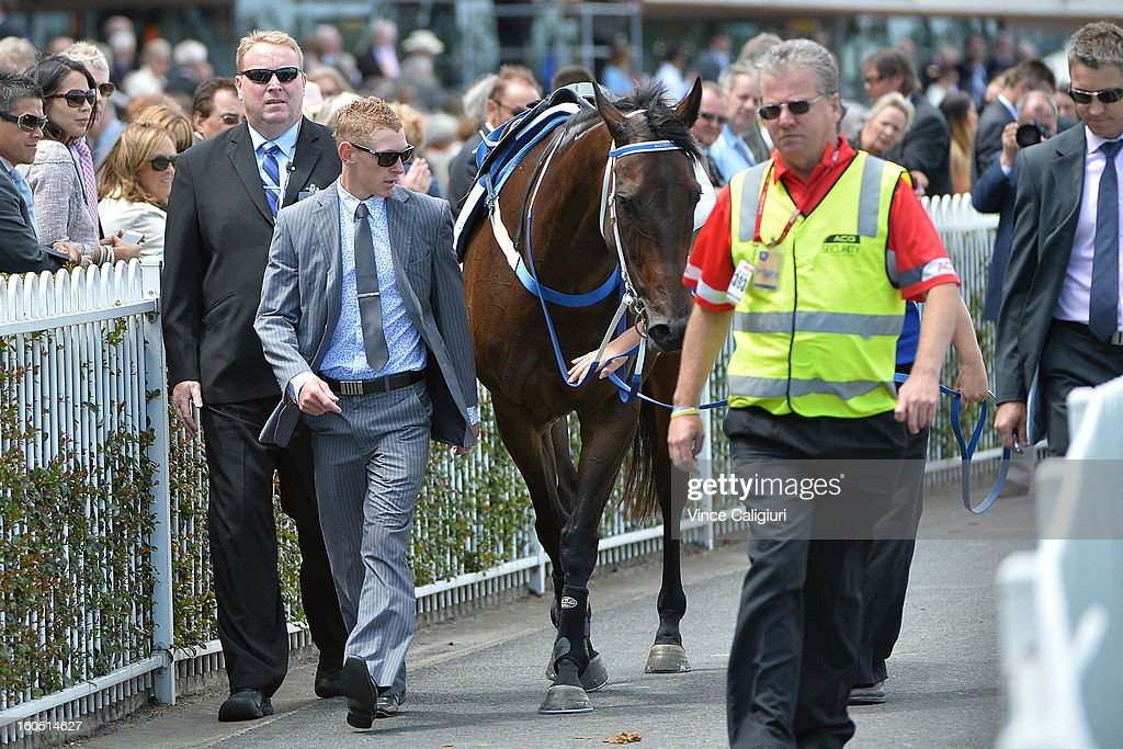 Black Caviar surrounded by security after her exhibition gallop in between races at Caulfield Racecourse on February 2, 2013 in Melbourne, Australia.