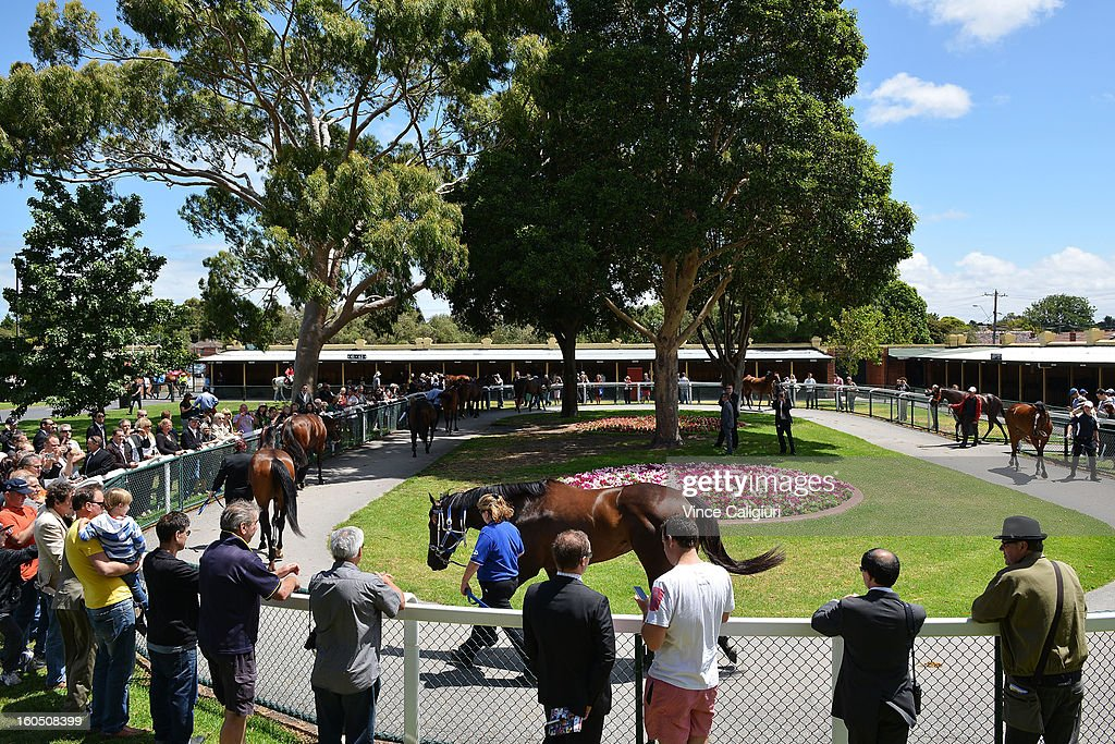 Black Caviar walks around the stable yard before her exhibition gallop in between races at Caulfield Racecourse on February 2, 2013 in Melbourne, Australia.