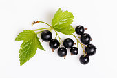 Black currant with leaves isolated. Sprig of berries close-up