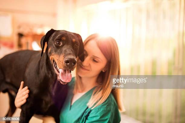 Black Doberman on a medical exam at vet's office.