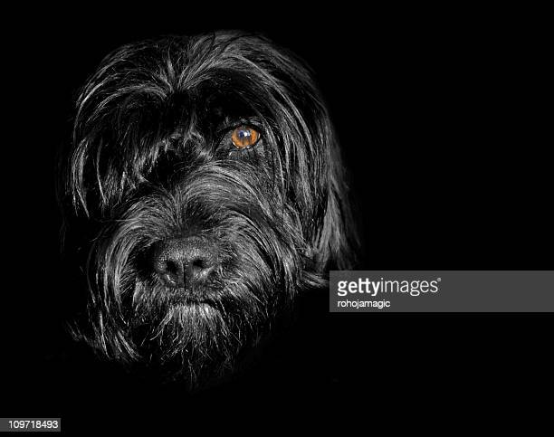 Black dog in the shadows