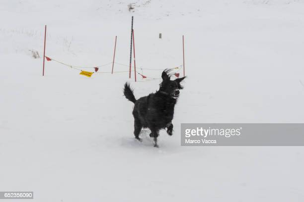 black  dog  in the snowstorm