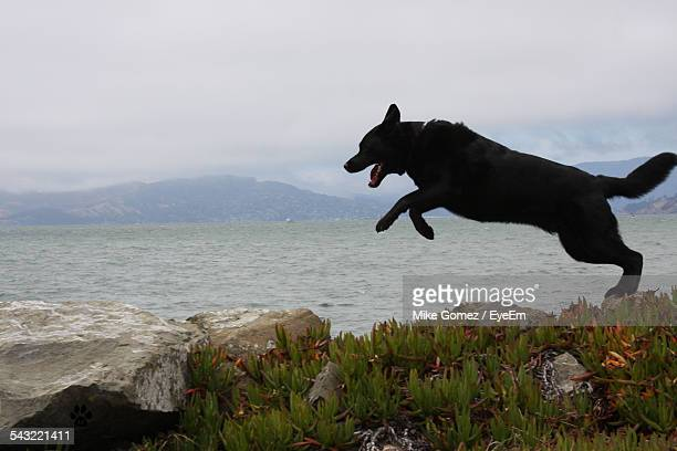 Black Dog Jumping On Rocks In Front Of Lake Against Sky