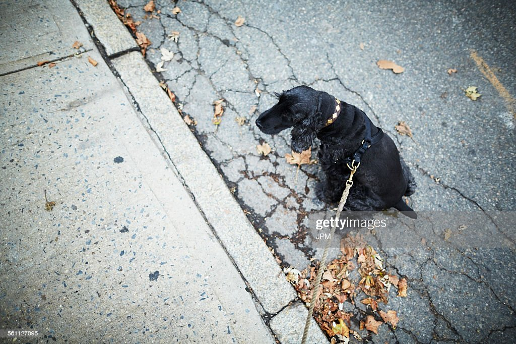 Black dog on leash sitting in the street