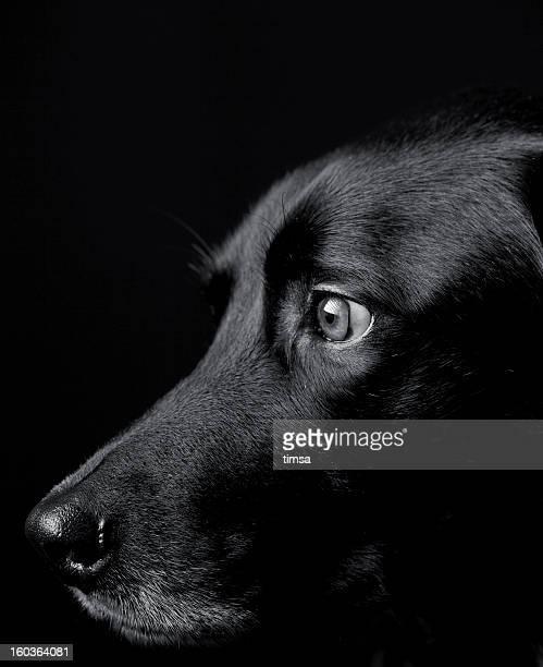 Nero cane profilo