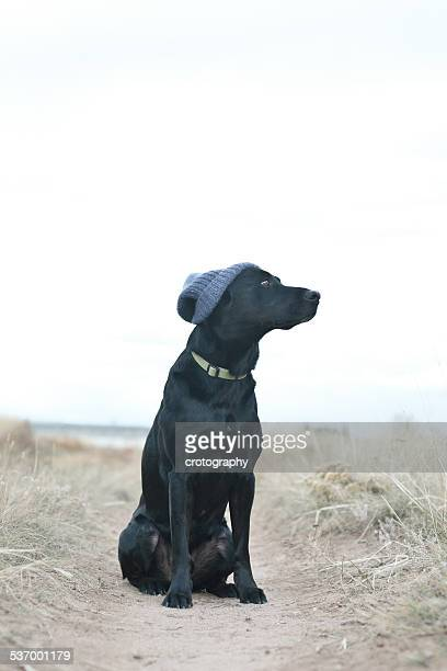 Black dog wearing knit cap sitting on footpath
