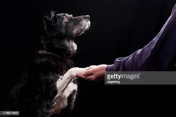 A black dog with white paws shaking a man's hand