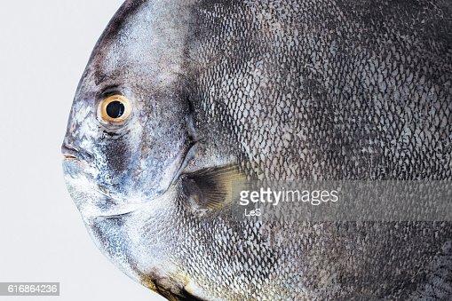 black fish : Stock Photo