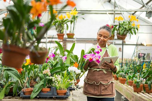 Black gardener using digital tablet in greenhouse : Stock Photo