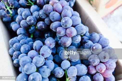 Black grapes : Stock Photo