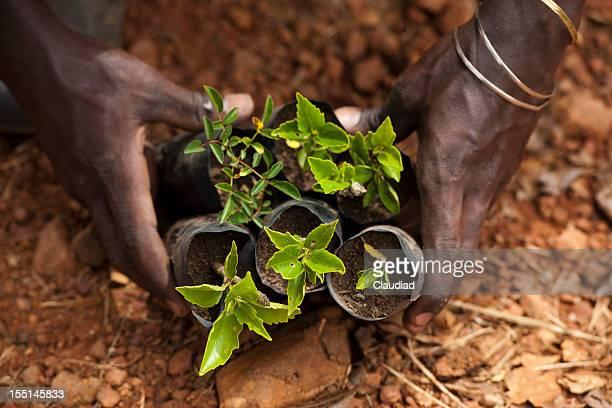 ブラックの手に植物