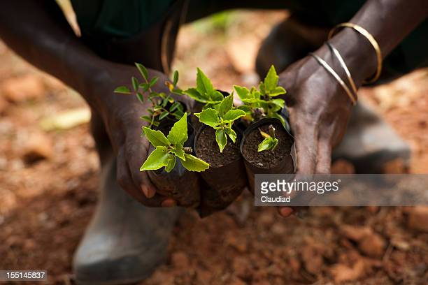 Black hands with plants