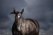 Black horse on stormy sky