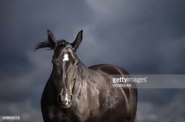 Black horse on stormy sky