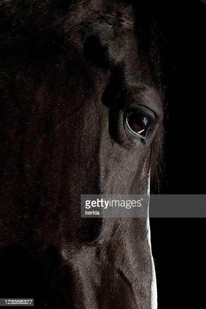 Black Pferd