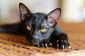 Black kitten with claw and scratch on the mat