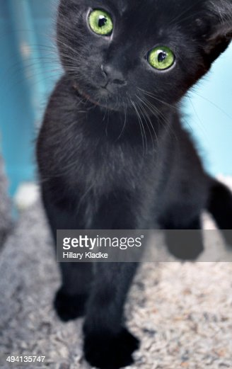 Black Kitten With Green Eyes Stock Photo | Getty Images