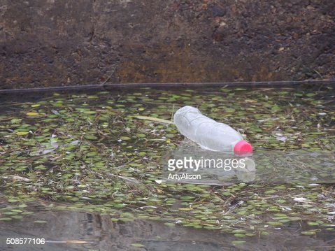 Black Mangrove seedpods floating on the water along with garbage : Stock Photo