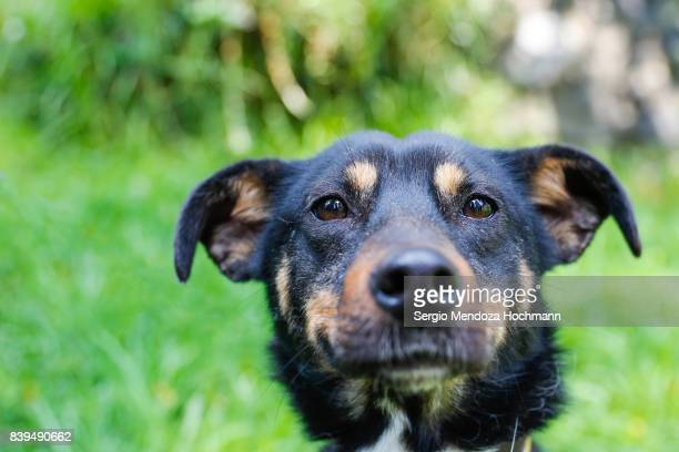 A black, mixed-breed dog in a dog shelter in Mexico City