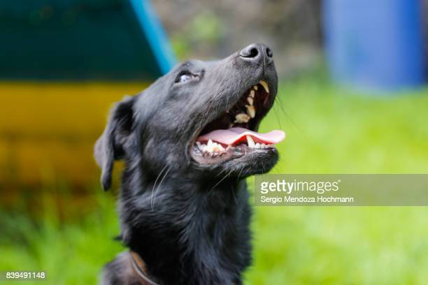 A black mixed-breed dog with a grass background in a dog shelter in Mexico City