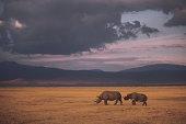 Black rhino on savanna