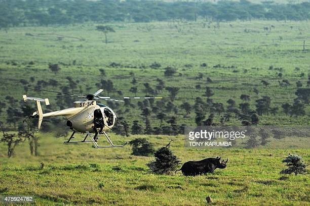 Black rhinocerous attempts to get away from an approaching helicopter at the Lewa wildlife conservancy in Laikipia county some 258 km north of the...