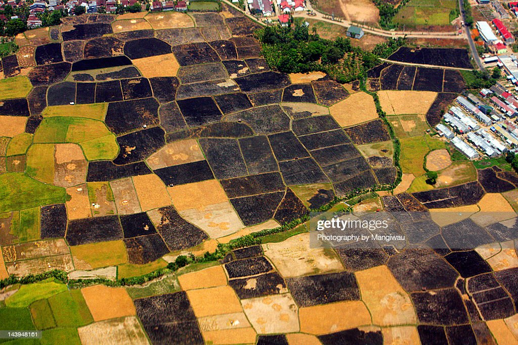 Black ricefields : Stock Photo