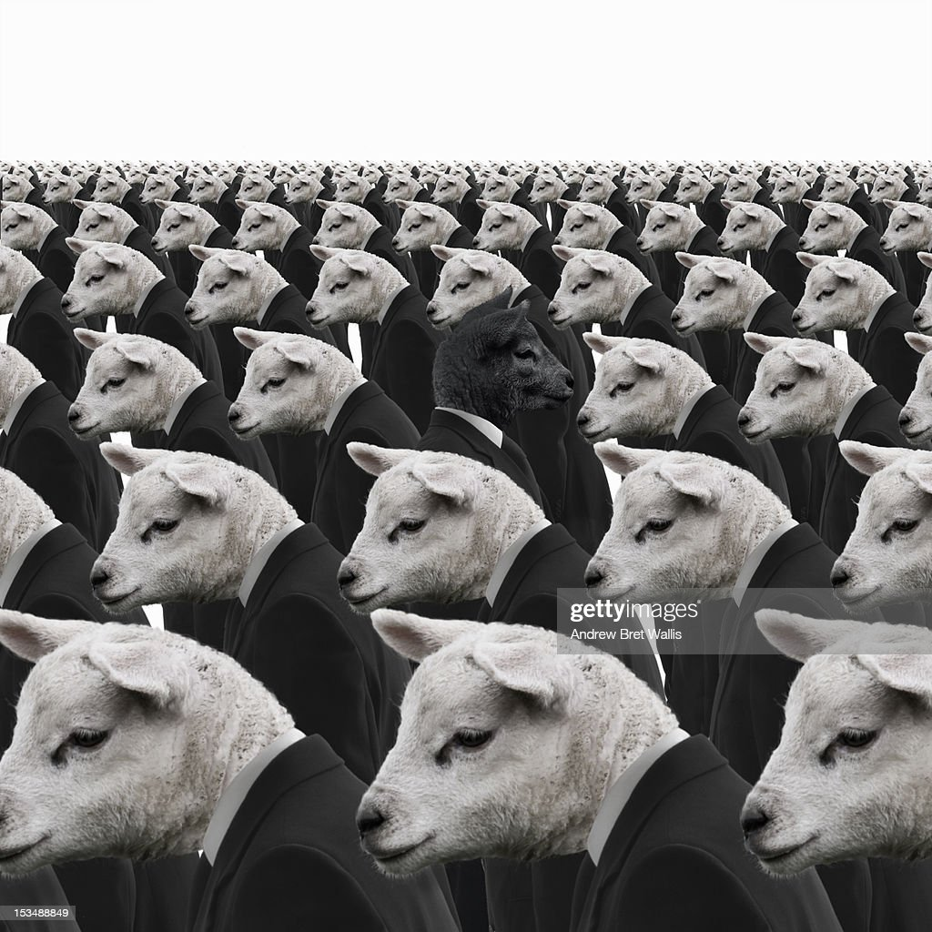 Black sheep amongst white sheep businessmen