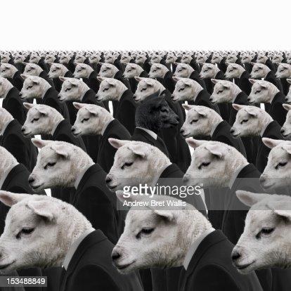 Black sheep amongst white sheep businessmen